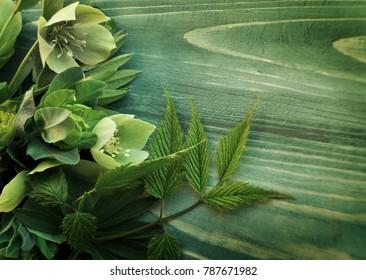 Green flower of hellebore on wood background