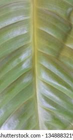 Green flower leaves texture