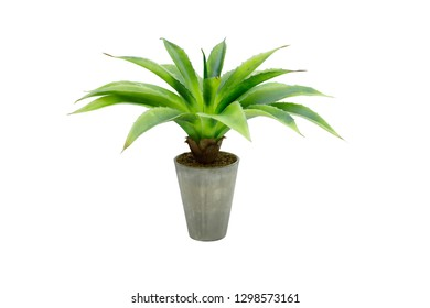 green flower in a pot, isolated on white