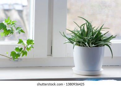 Green flower in a white flowerpot on the window sill at home