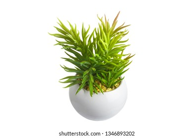 Green flower in white pot on white background, isolated