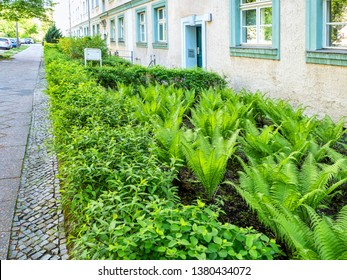Green flowerbed with bushes and ferns near the house, stone paved sidewalk, Berlin city, Germany