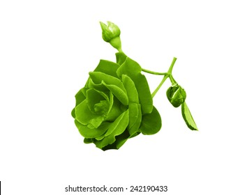 Green flowers isolated on white background.