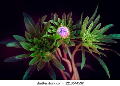 green flowers on a black background, abstract composition.