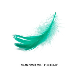 Green fluffy feather soft isolated on the white studio background