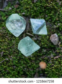 Green Fluorite Natural Octahedron Crystals on the green moss in the forest preserve.