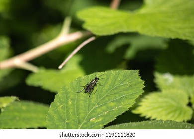 Green Fly on leaf