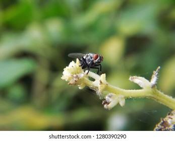 Green fly perched on white branches