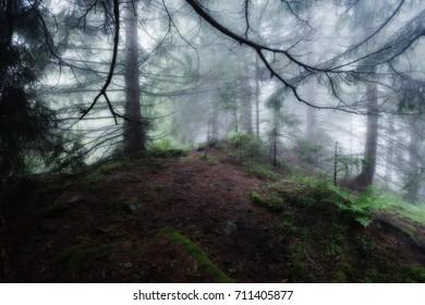 Green foggy mystical dark forest