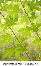 green foliage background