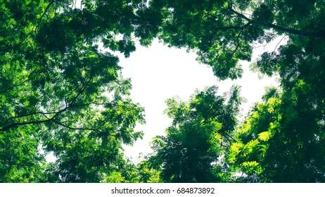 Green foliage background.