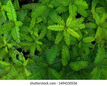 Green foliage background in tropical summer