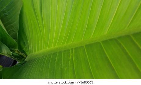 Green foliage of beautiful foliage