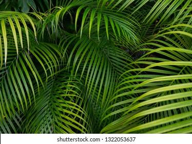 Green foliage palm leaves