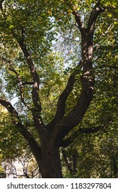 Green foliage tree perspective  background