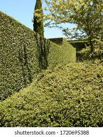 Green foliage types and textures formed by clipped hedges and cloud pruned  shrubs.