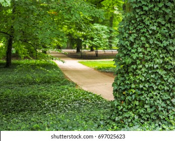Green foliage and walkway in the public park, selective focus