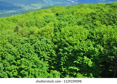Green green forest from above