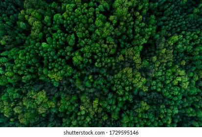 green forest from above tekstura - Shutterstock ID 1729595146