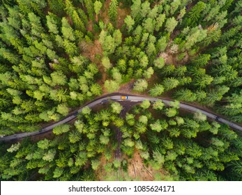 Green forest aerial drone view. Road with truck in forest from above. Transportation background.