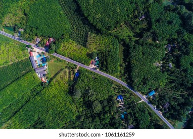 Green forest agricultural plantation with rural road aerial view