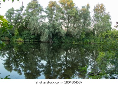 green forest along the orel river in summer in ukraine in the dnipro city in the morning