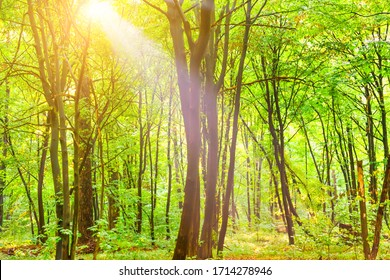 Green forest with autumn trees, footpath and sun light through leaves