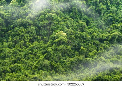 Green forest background with mist.