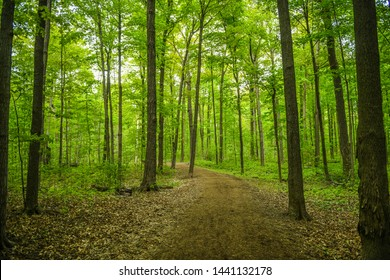 green forest background with trees at spring season