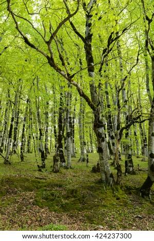 Green Forest Background Wild Woods Vertical Wallpaper