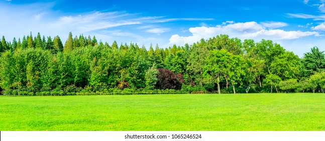 Green forest in the blue sky and grassland