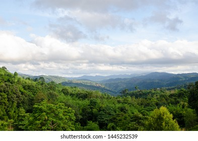 Green forest with blue sky nature background.