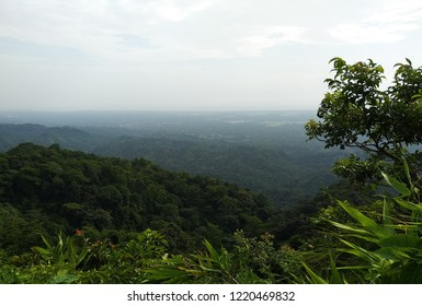 Green Forest Of Canda