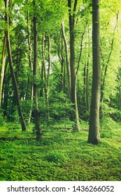 Green forest with a densely covered forest floor and tall trees.