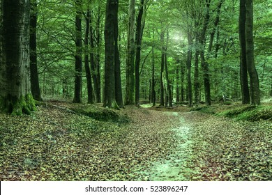 A green forest in the fall with a sandy path covered with leaves.