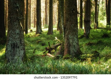 A green forest floor in the spring