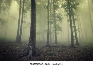 green forest with fog between trees