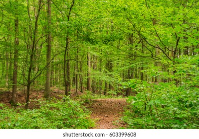Green forest with fresh foliage and idyllic path at spring season.