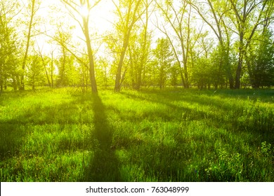 green forest glade in a rays of sun