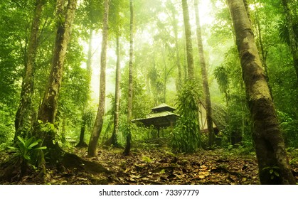 Green forest and huts in a misty morning, Malaysia.