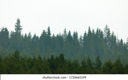 green forest isolated on white