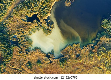 Green forest and lake in fall season. Flat lay. Ptasi Raj nature reserve in Gdansk, Poland.