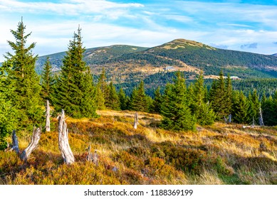 Green forest landscape with Maly Sisak Mountain and mountain huts, Giant Mountains, Krkonose, Czech Republic.