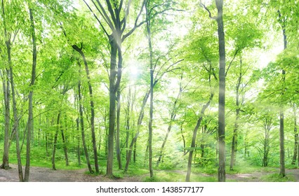 Green forest landscape panorama with trees and sun light going through leaves