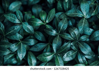 Green forest leaves background from above. Modern nature and eco environment pattern creative flat lay layout. Trendy dark moody greenery texture top view.