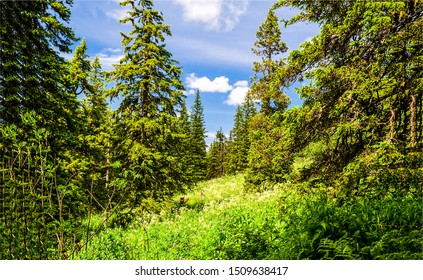 Green forest meadow landscape. Forest meadow summer. Summer forest green view. Forest meadow in sunny day