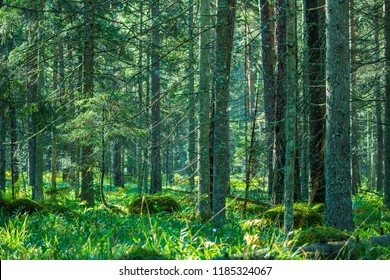 Green forest at the morning