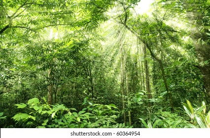 green forest in morning sunlight