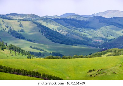 Green forest and mountain slopes, summer, Altai