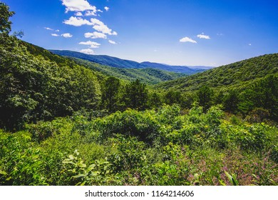 green forest mountains